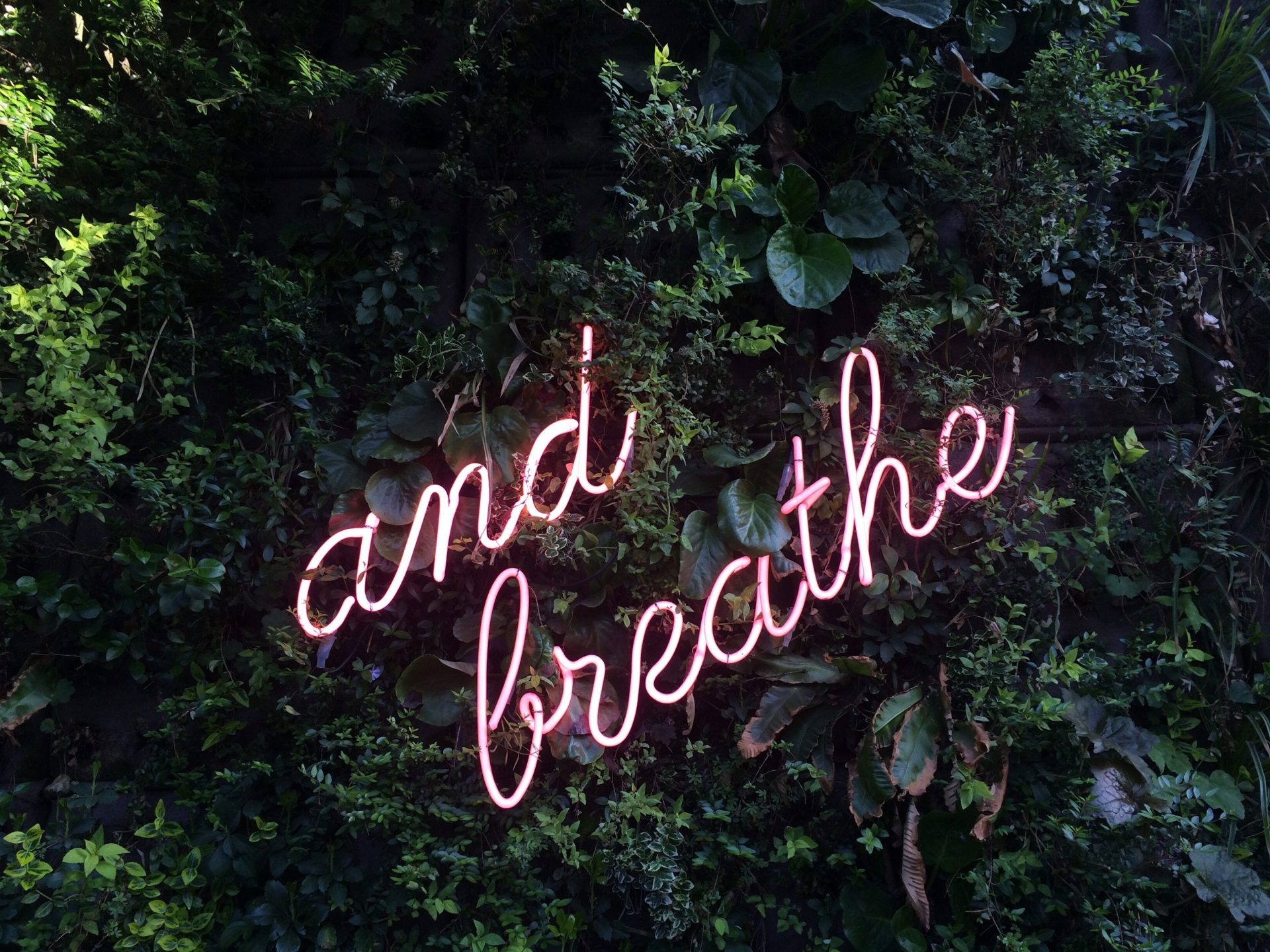 pink neon sign breath